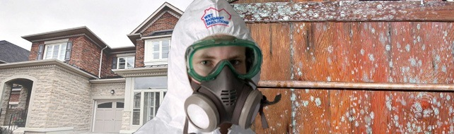 mould removal contractor
